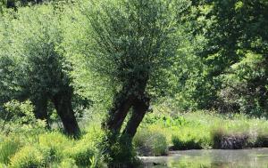 ZIOŁOWE WTORKI - Czarodziejskie zioła 1